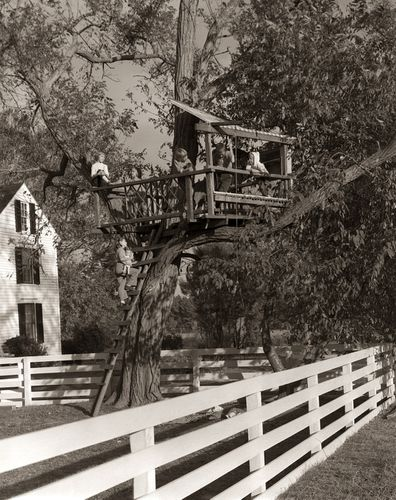 Treehouses have been around as long as children have been climbing trees.