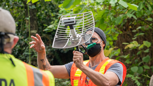 In this October 7, 2020, photo provided by the Washington State Department of Agriculture, entomologist Chris Looney tracks a live Asian giant hornet affixed with a tracking device near Blaine, Wash.