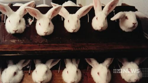 About 27,000 animals are subjected to live testing each year. (9NEWS)