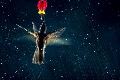 'The art of motion'. Category: Birds in Flight. Silver award winner.