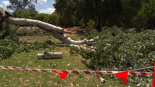 Adelaide birthday tree collapse hero