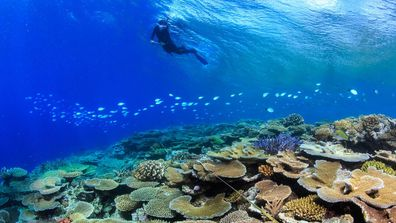 Photos of Great Barrier Reef affected by mass bleaching in 2016