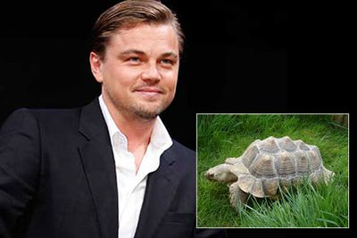 Leonardo DiCaprio owns a giant tortoise. And with a lifespan of 80 years the unusual pet is likely to outlive him.