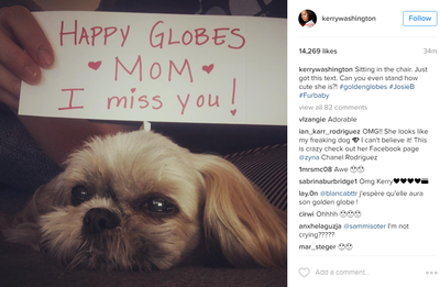 <p>Technically she's not an accessory but this snap of Kerry Washington's pup is so damn cute we couldn't resist. Kerry shared the image on her Instagram account, telling her fans her four-legged friend sent her this message of support while she was in makeup pre-show.</p> <p>Image: <em>Instagram</em>/@kerrywashington</p>