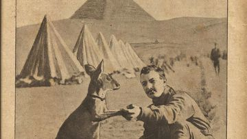 The lesser known Anzac: the humble kangaroo