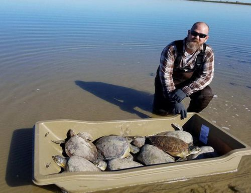 At least 18 turtles have had to be rescued in Christmas Bay in Texas. (National Oceanic and Atmospheric Administration)