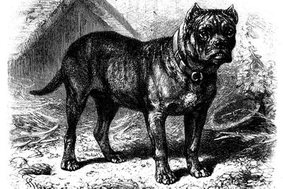 Nine Extinct Dog Breeds