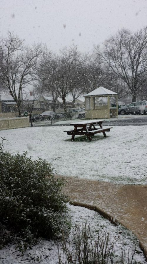 Winter wonderland after snow falls in Ballarat. (Twitter, @lilylala50)