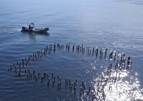 The test prototype in Reunion Island is made up of 200 pipes, pinned to the sea floor. (Photo credit: Franck Grangette)