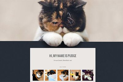 "Dough-faced Pudge has her own website, <a href=""http://pudgethecat.com/"" target=""new"">pudgethecat.com</a>, which includes a daily blog and an online store selling Pudge t-shirts, calendars and iPhone cases."