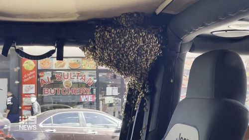 Sydney man returns from shop to find swam of bees have taken over his car