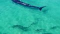 Stunning footage of sharks, schools of fish and even a surfing whale have been captured off the coast of Queensland's Fraser Island, giving a rare aerial look at the region's aquatic life.