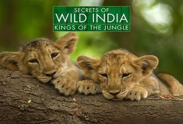 Secrets of Wild India: Kings of Jungle