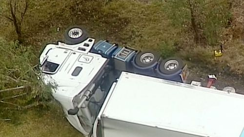The driver and his dog were uninjured. (9NEWS)