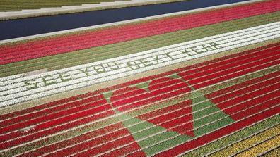 Dutch Daffodils message to tourists