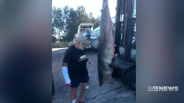 Fisherman left bloodied after great white shark jumps onto boat