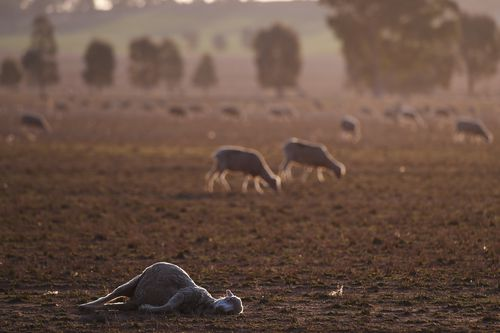 In regional Queensland, seven years without significant rainfall is taking its toll on farms around the state.
