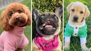 9news viewers send in photos of dogs