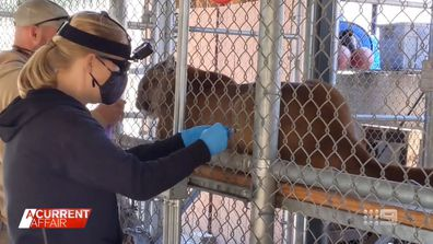 US zoo animals receive their first vaccine doses.