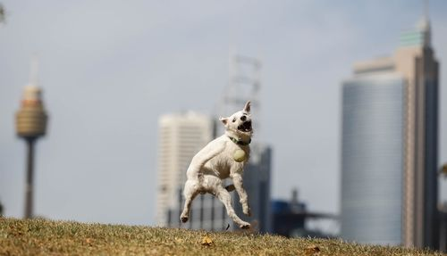 Hunter the dog is seen enjoying the warm summer weather in Sydney. (AAP)