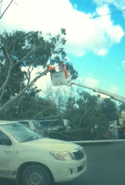 Destructive winds caused trees to fall across Melbourne. (Photo: Katie Smith)