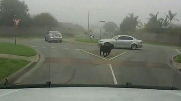 Goat LeBron