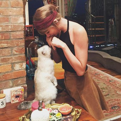 8. Taylor Swift and her cat Olivia. Seeing a trend yet? Likes: 2.3 million. Comments: 36.1k.