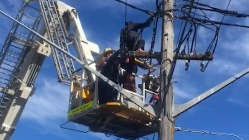 A child has been rescued from the top of a live power pole in Sutherland in Sydney's south. The boy was 15-metres high. Picture: Supplied