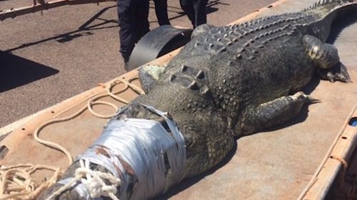 Big crocs have been found in the harbour before. Picture: 9NEWS