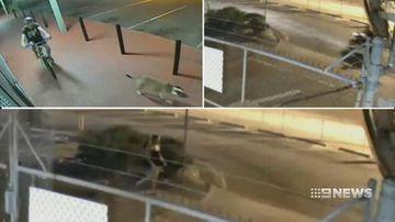 VIDEO: New clues to catch sex predator preying on Queensland women