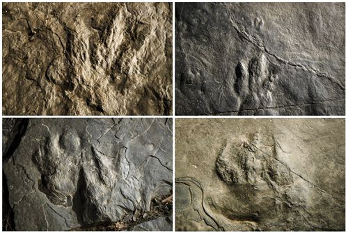 Dinosaur tracks millions of years old discovered on hiking trail by volunteer