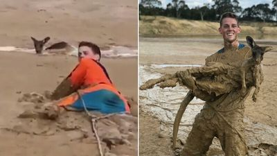 Teens rescue hapless roo stuck in the mud