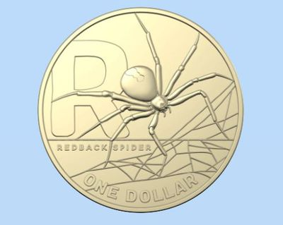 R is for Redback Spider