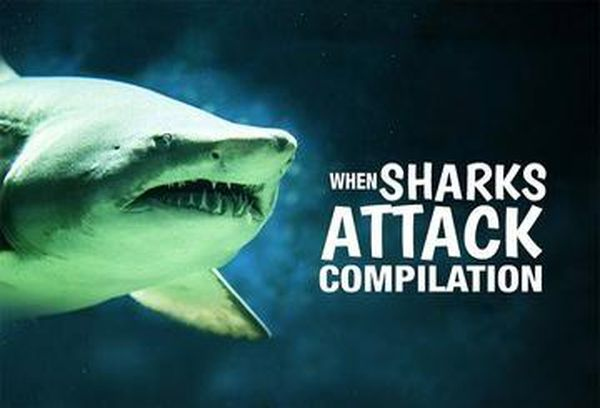 When Sharks Attack Compilation