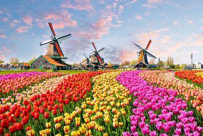 (Tied) 6. Netherlands