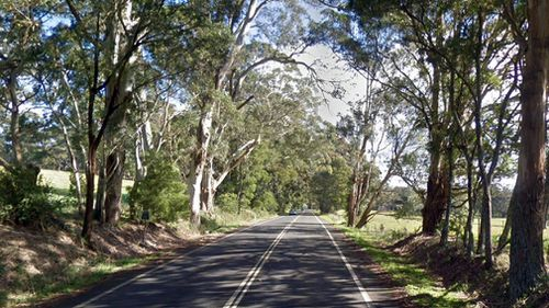 Teen critically injured after driver hits tree 'avoiding wombat'