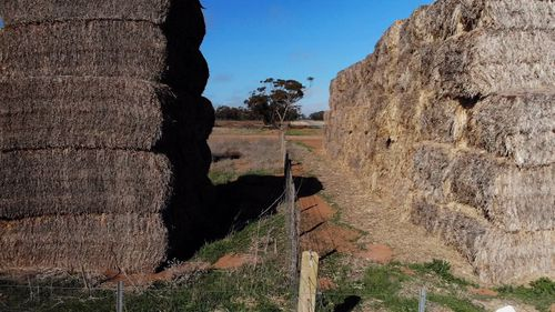 Low-grade hay is selling for high prices to farmers desperate to feed their stock.