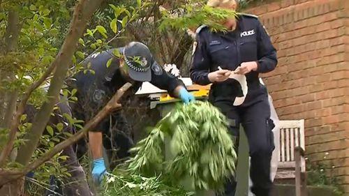 Cannabis raids sydney