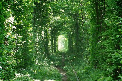 <strong>The Tunnel of Love, Ukraine</strong>,