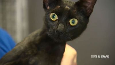 'Scream for help': Abused kitten pulled from river
