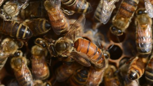 Up to 10,000 rare bees killed by 'brain dead morons'