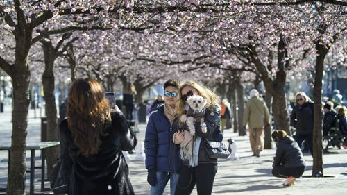 A couple poses for a photo while strolling with others among the blooming cherry trees in Kungstradgarden park in Stockholm, Sweden. The country has one of the most relaxed strategies in place when it comes to dealing with the coronavirus pandemic.