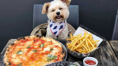 Dogs can be foodies too