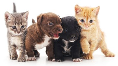Kittens and puppies stock image
