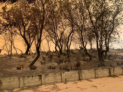Scorched earth and twisted, black trees, it was a tough day on NSW's  south coast.