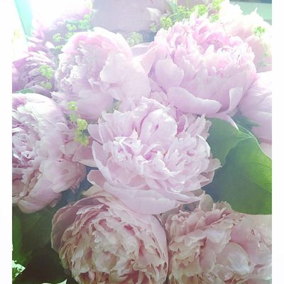 <strong>Peonies</strong>