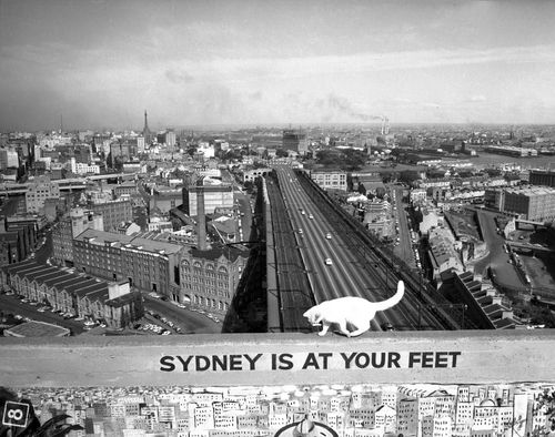 The Sydney city skyline as it looked in 1957.