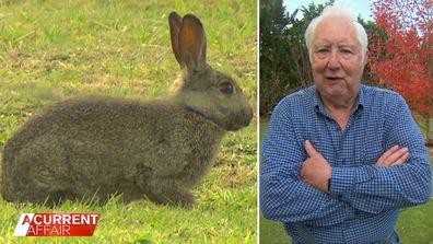 The 'rabbit plague' destroying property