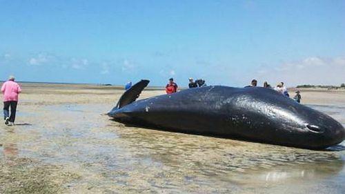 Shocked locals gather around one of the dead whales. (Supplied, Josh Ruddock)