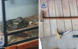 Police seize python, weapons, drugs and stolen car in raid on Comanchero's home